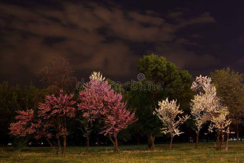 Nacht in het park stock foto