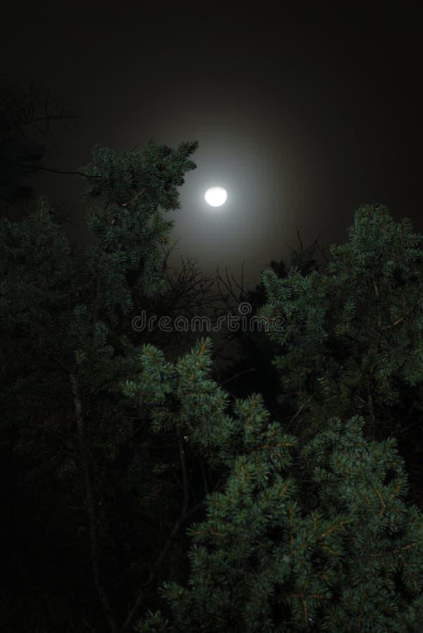 Nacht, Maan over Bomen royalty-vrije stock afbeeldingen