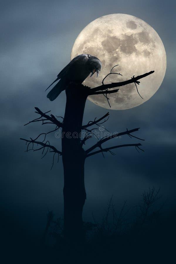 Nacht van de kraaien stock illustratie