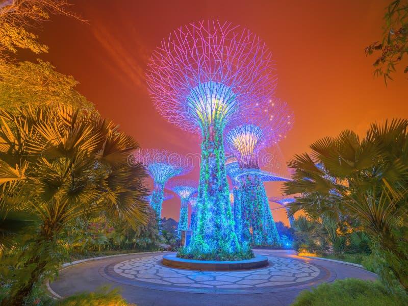 Nachtansicht des Supertree Grove an den Gärten nahe Marina Bay lizenzfreie stockfotos