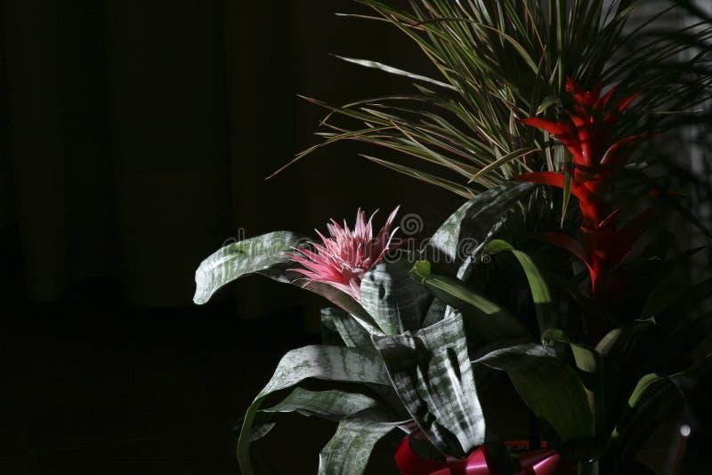 Nachtblume lizenzfreies stockfoto