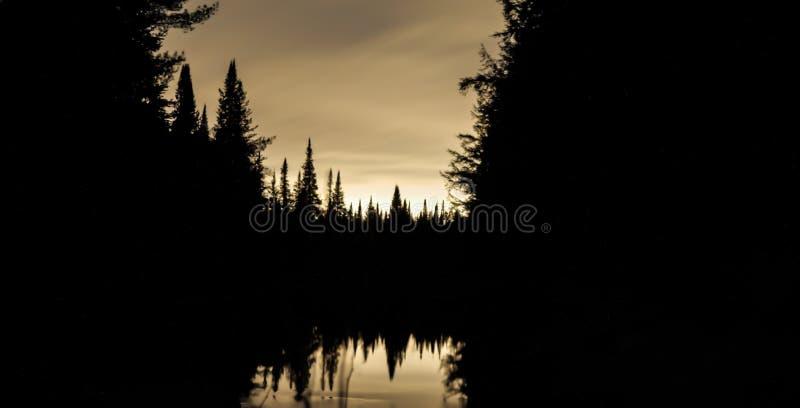 Nachtbomen door een Rivier royalty-vrije stock foto's