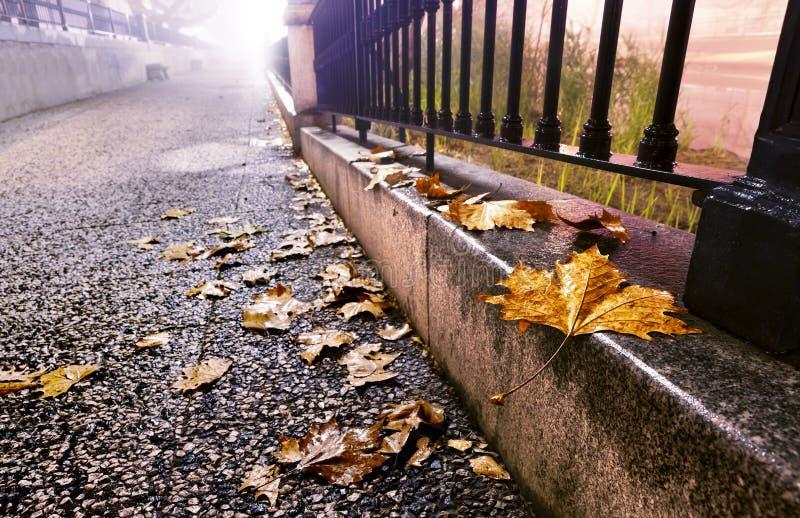 Nachtcityscape in de herfst royalty-vrije stock foto's