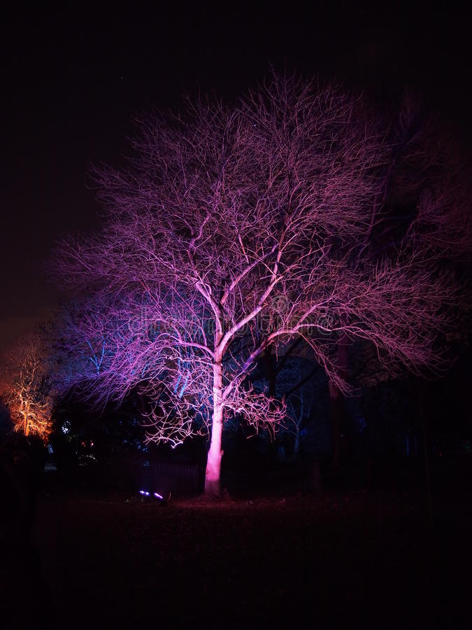 Nachtgeheimzinnigheid Purpere Boom in Kew-Tuin royalty-vrije stock afbeelding