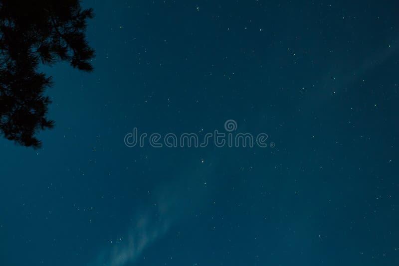 Nachthemel met sterren en boomsilhouet royalty-vrije stock foto's