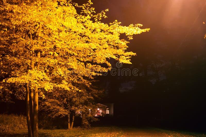 Nachtherbst Park mit einer Laterne lizenzfreie stockfotografie