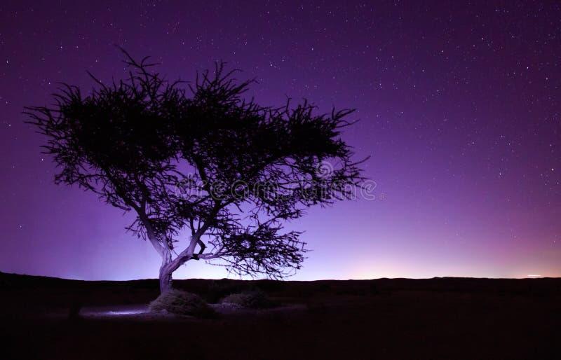 Nachtlandschaft in der langen Belichtung, Baum in der Wüste und Sternhintergrund lizenzfreies stockbild