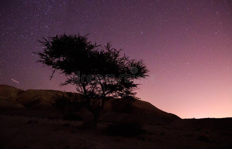 Nachtlandschaft in der langen Belichtung, Baum in der Wüste und Sternhintergrund stockfoto