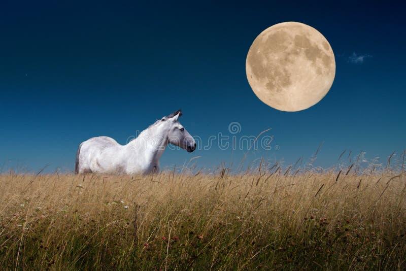 Nachtlandschaft mit Pferden am Mond lizenzfreie stockfotografie