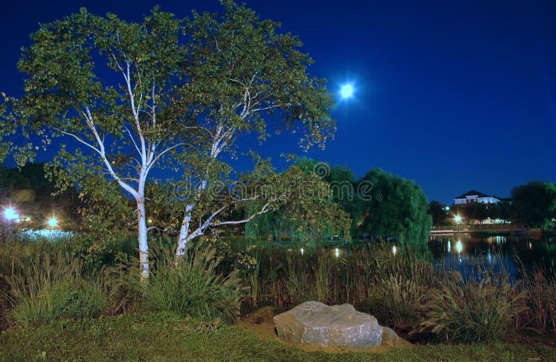Nachtlandschaft, park_1 lizenzfreie stockfotografie