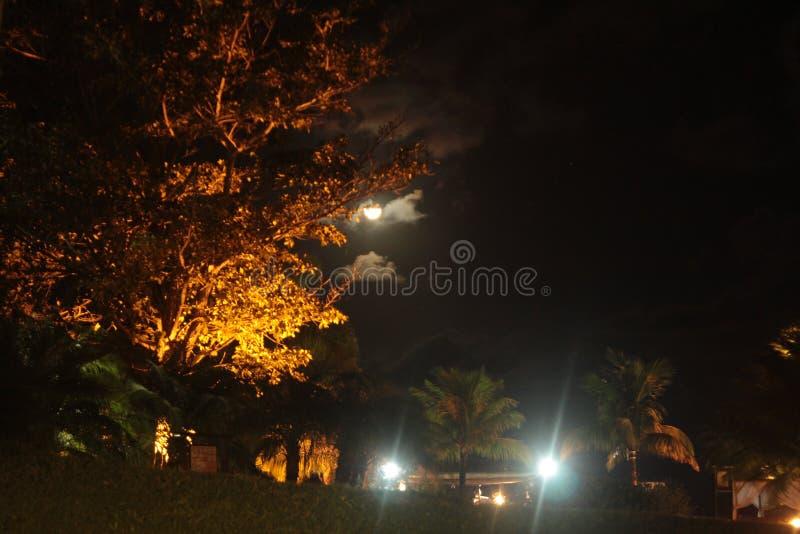Nachtlandschap en de ster stock afbeelding