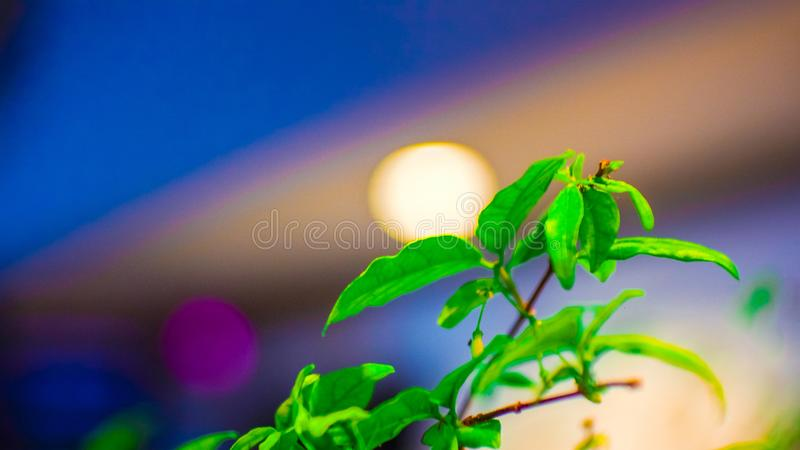 Nachtlicht met groene bladeren royalty-vrije stock foto