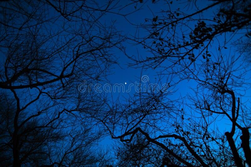 Nachtmaan door de takken van bomen stock fotografie