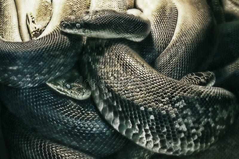Nachtmerrie van slangen