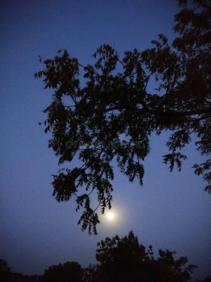 Nachtmondszene stockbild