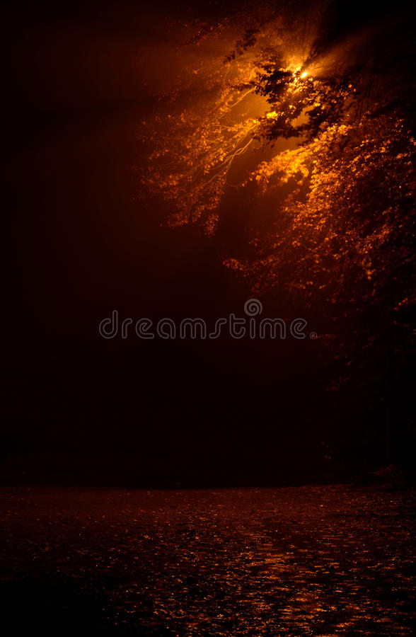 Nachtnebelige Straße stockfotos