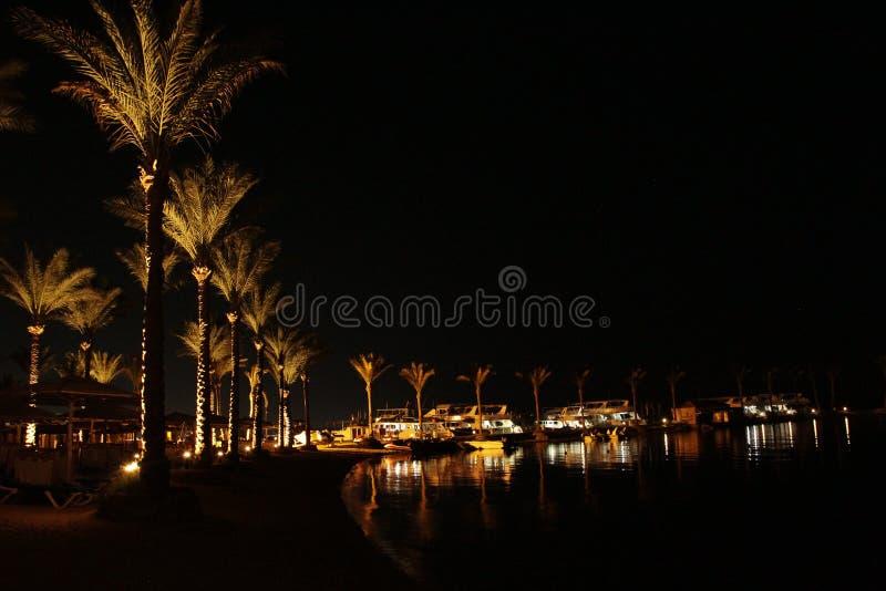 Nachtpanorama met mening van verlichte palmen op zeekust van Hurghada Tropische toevlucht stock afbeeldingen