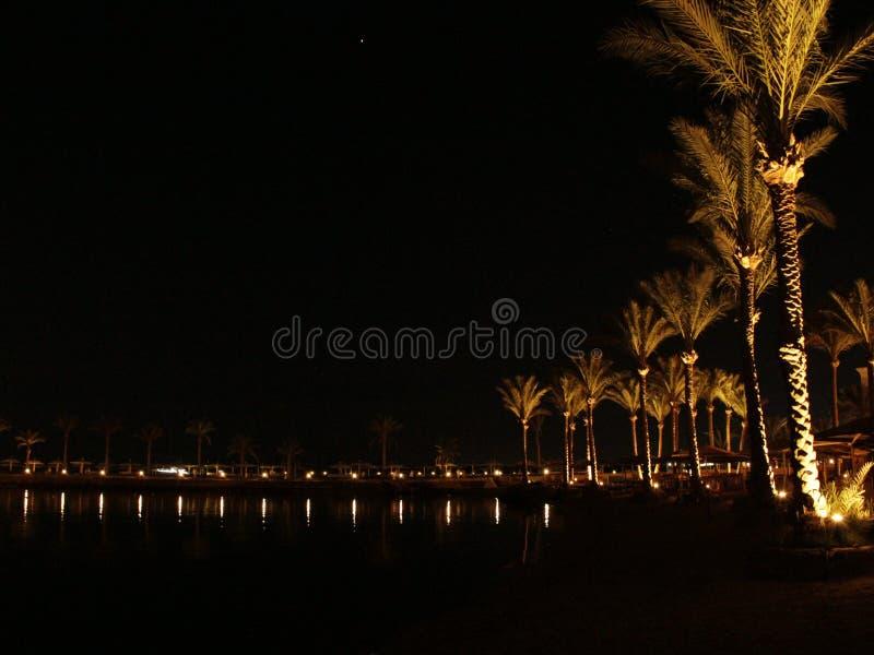 Nachtpanorama met mening van verlichte palmen op zeekust van Hurghada Tropische toevlucht royalty-vrije stock afbeelding