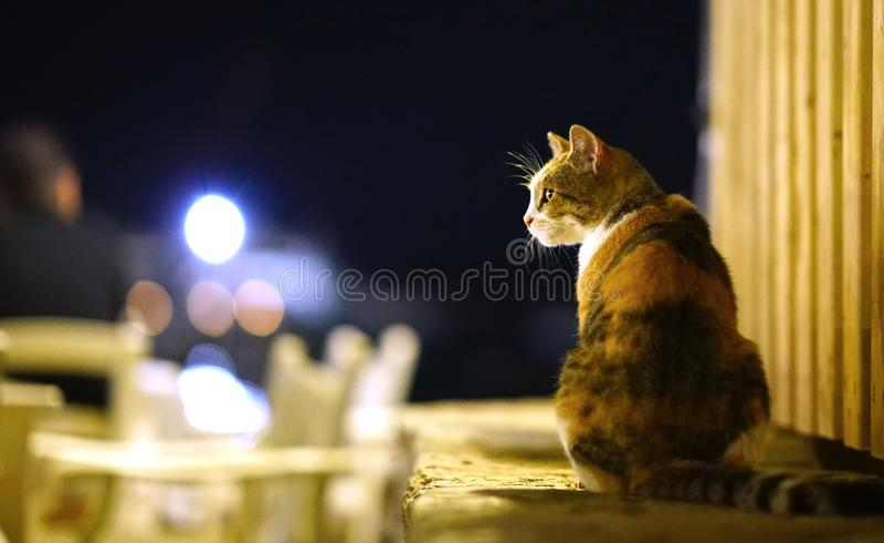 Nachtporträt einer Katze, die mit Interesse schaut stockfoto