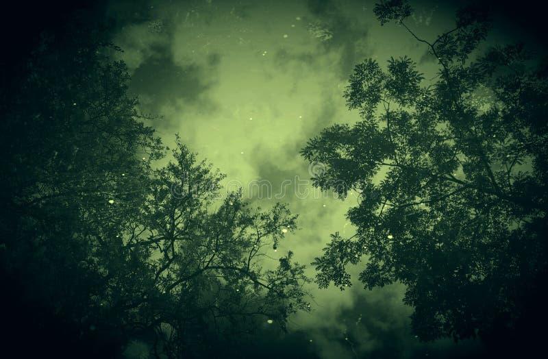 Nachtschönheit lizenzfreies stockbild