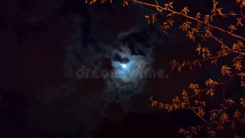 Nachtschatten stockfotografie