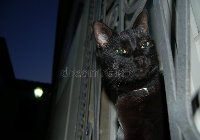 Nachtschwarze Katze stockbild