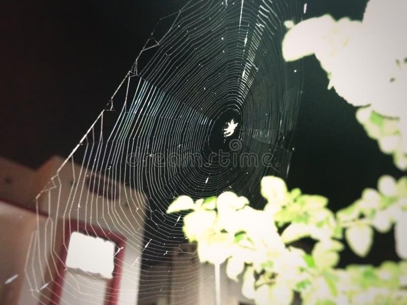 Nachtspinne, die spidernet macht lizenzfreie stockbilder