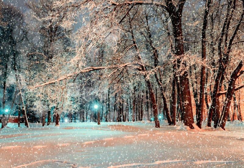 Nachtstadt-Winterpark unter den Winterschneefällen umfasst mit Winterfrost und Schnee - Winternachtpark-Landschaftsansicht lizenzfreie stockfotos