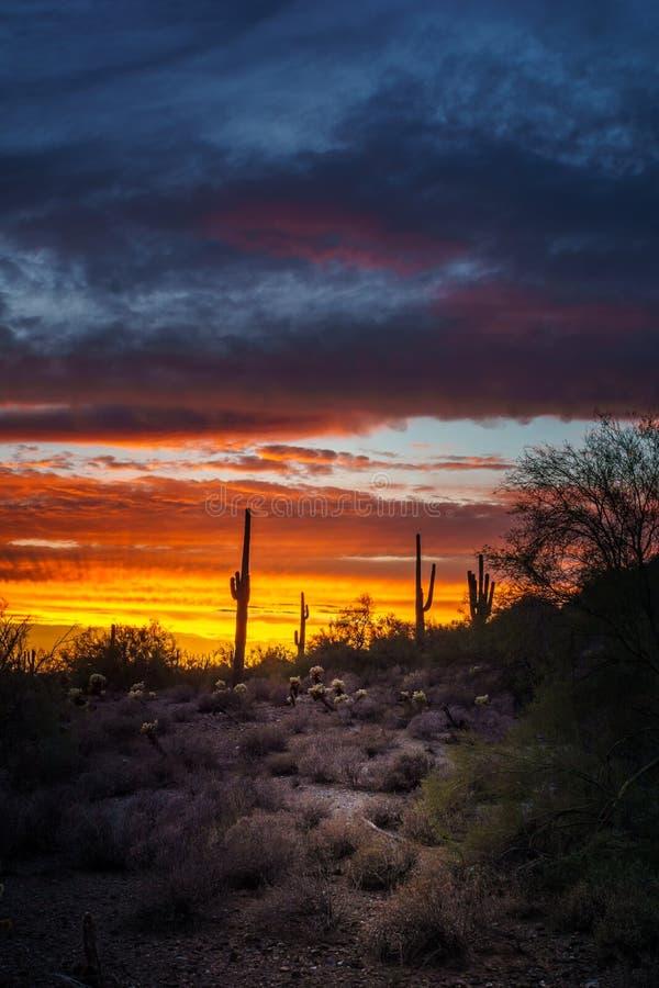 Nachtszene Phoenix Arizona nach Sonnenuntergang lizenzfreie stockfotos