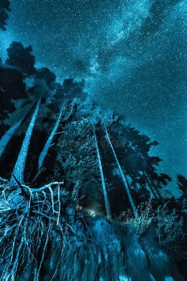 Nachtwaldlandschaft mit Sternen lizenzfreie stockfotos