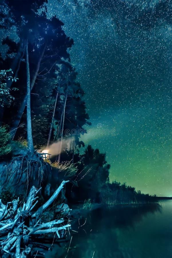 Nachtwaldlandschaft mit Sternen lizenzfreie stockfotografie