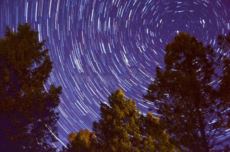 Nachtzeitbaum mit Milchstra?e lizenzfreie stockfotografie