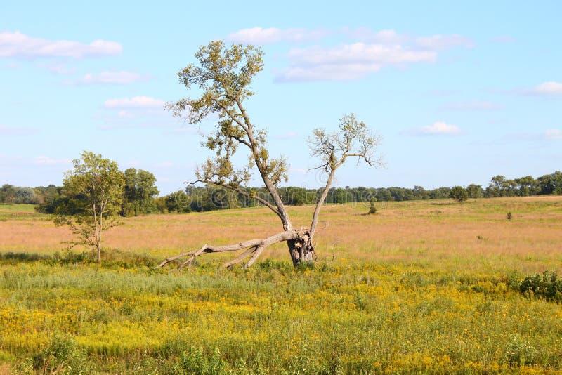 Download Nachusa Grasslands - Illinois Stock Image - Image of environmental, scene: 18645855