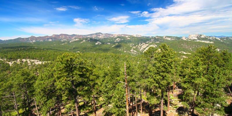 Nacional Forest Panoramic de Black Hills fotografía de archivo