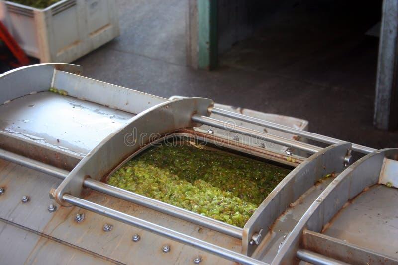 naciskają wina winogrona zdjęcie royalty free