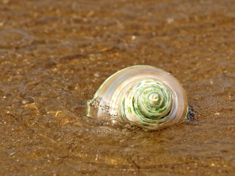 Nacreous Seashell in der Seewelle. stockfotografie