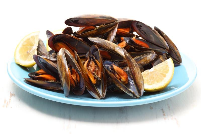 Naczynie gotowani mussels zdjęcie royalty free