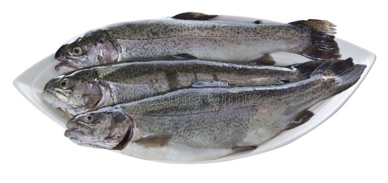 naczynie ryba zdjęcia royalty free