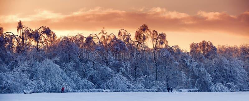 nad śnieżny wieczór las zdjęcia stock