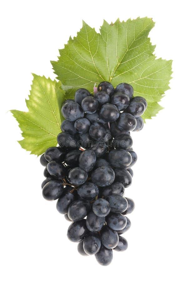 nad biel karmowy winogrono obrazy stock