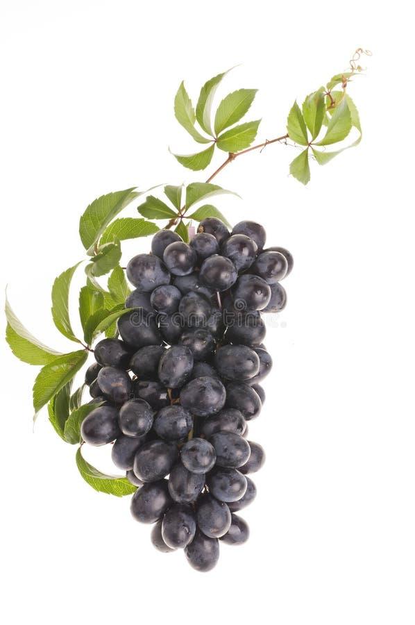 nad biel karmowy winogrono zdjęcie stock