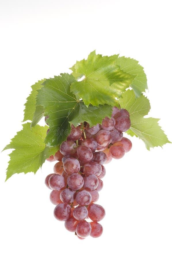 nad biel karmowy winogrono obraz royalty free