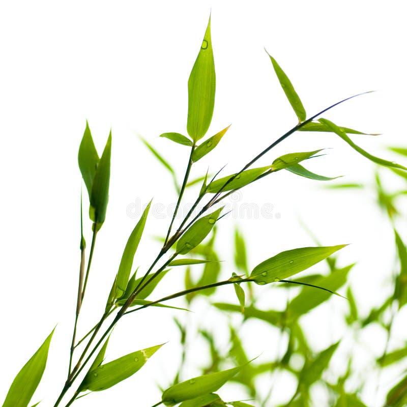 nad biel tło bambusy zdjęcia stock