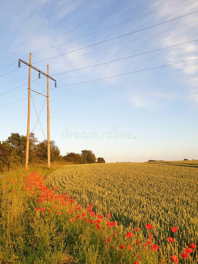 Nad j?czmienia polem trawy s?oma zdjęcie royalty free