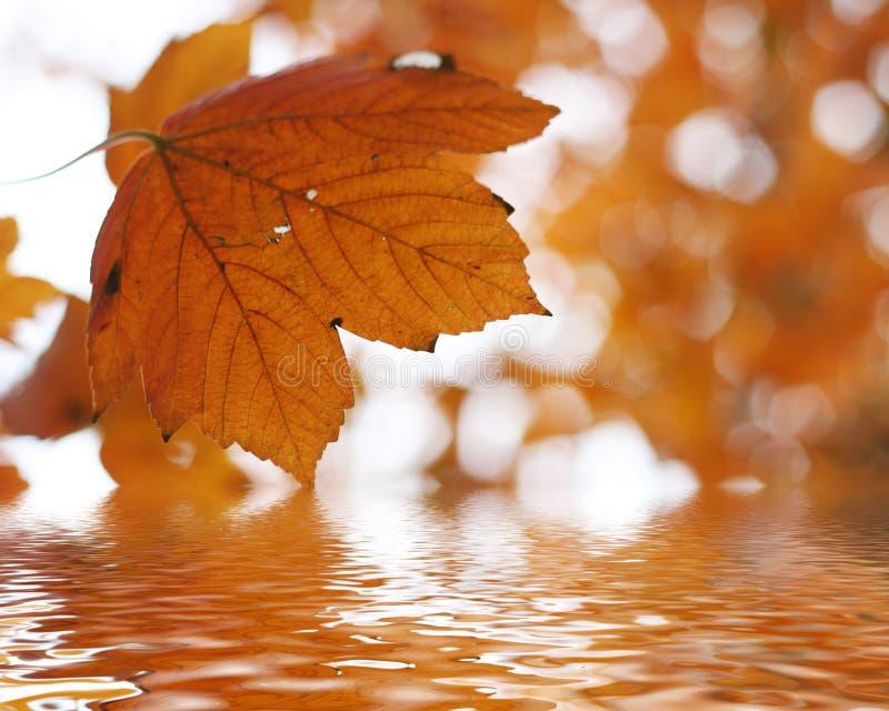 nad jesień liść woda zdjęcia royalty free