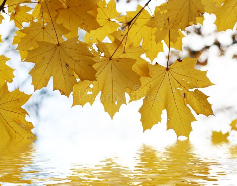 nad jesień liść woda obrazy stock