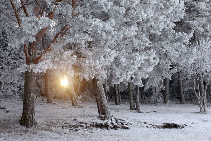 nad lasu krajobrazu strzału śniegu drzew zima zdjęcie royalty free