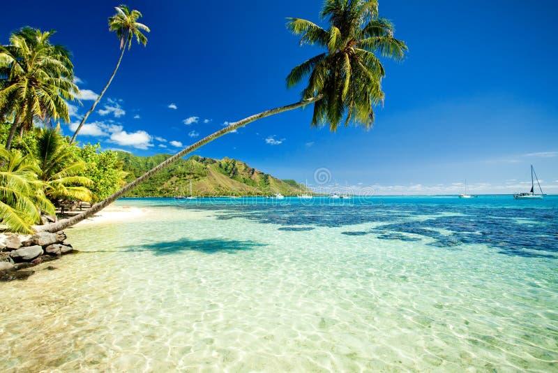 nad palmowym oszałamiająco drzewem wisząca laguna zdjęcia royalty free