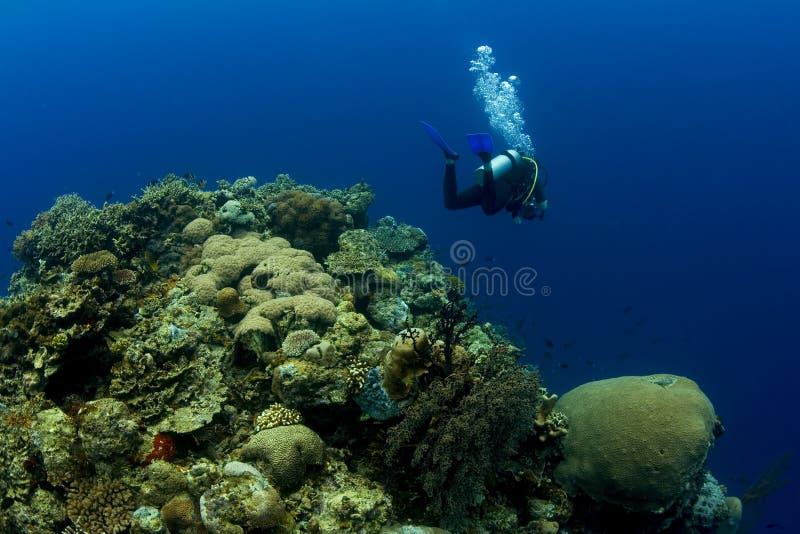 nad pinakiel rafą koralowy nurek zdjęcie stock