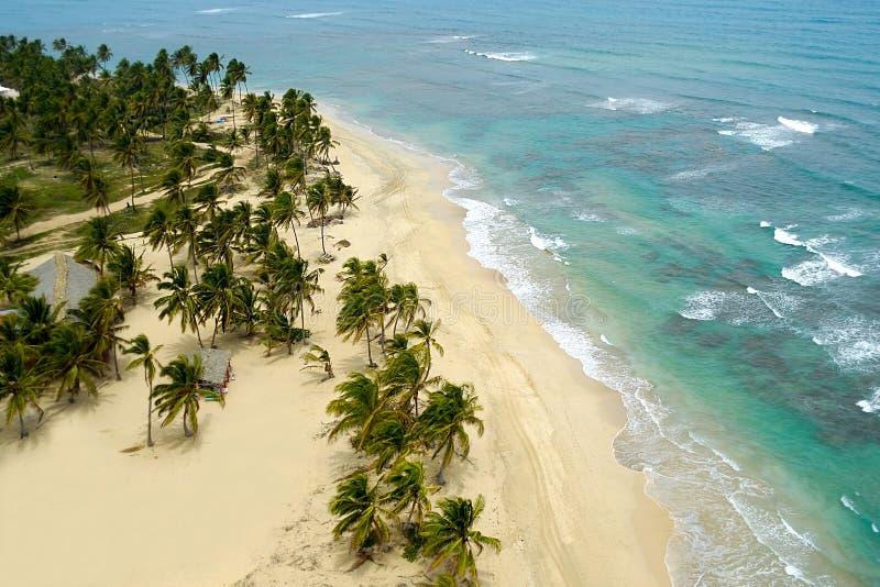 nad plażowy egzot zdjęcie royalty free